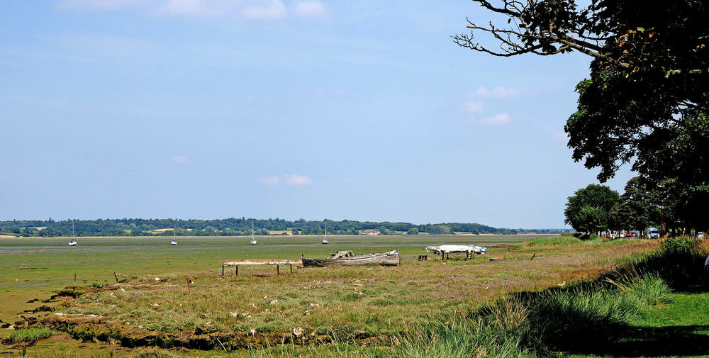 Beauty In Nature Blue Sky Day Field Grass Green Green Color Growth Landscape Mammal Manningtree Nature No People Outdoors River Stour, Rotten Boat Scenery Scenics Sky Tranquil Scene Tranquility Tree Vegetation Water Wide Angle View