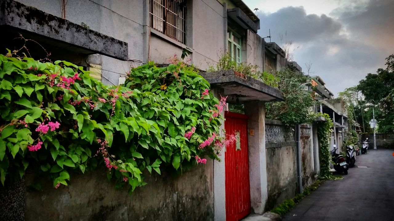architecture, building exterior, built structure, house, plant, outdoors, growth, no people, day
