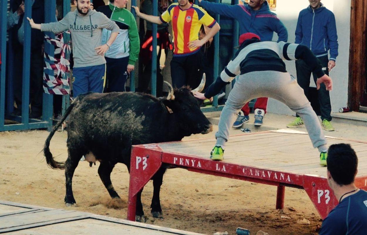 Bous Bous Al Carrer Bull Bulls ❤ BullsNation Spain♥ Summertime Valencia✌