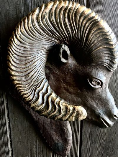 One Animal Animal Themes Animal Head  No People Close-up Day Outdoors Mammal Animals In The Wild Domestic Animals Nature Ibex Big Horn