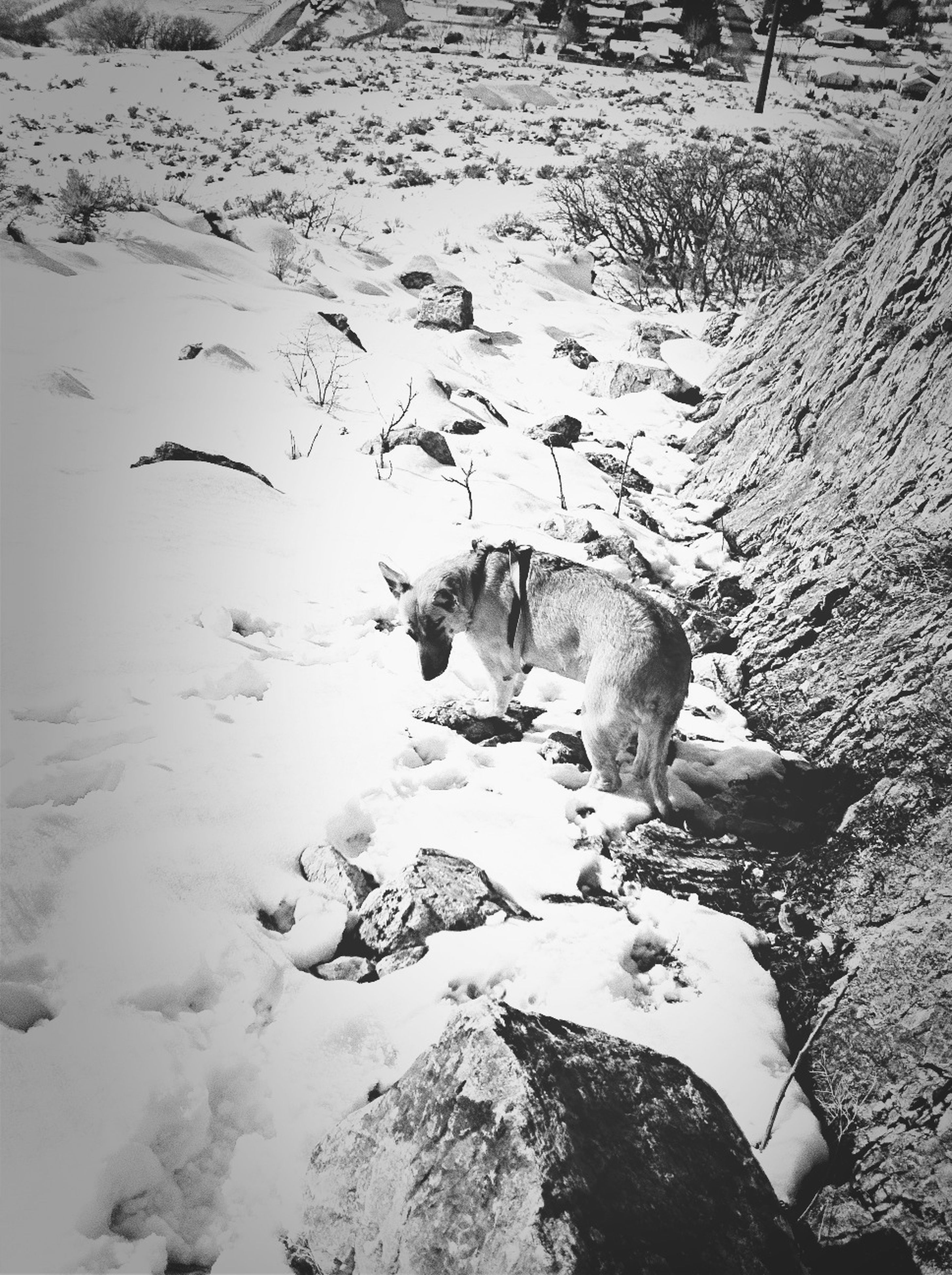 animal themes, animals in the wild, wildlife, bird, one animal, high angle view, snow, nature, winter, cold temperature, mammal, water, field, outdoors, day, no people, domestic animals, two animals, zoology, white color