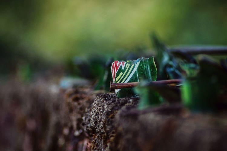 Greenery Depth Of Field Broken Old Looking Objects Simple Things