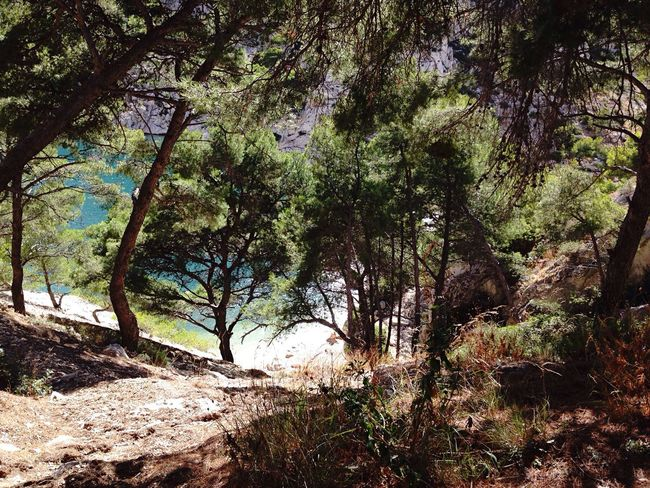 The way to paradise 🌊🌴 France Cassis Tree Ocean Green Nature Hello World Enjoying Life Check This Out EyeEm Best Shots EyeEm Nature Lover First Eyeem Photo Traveling Travel Photography