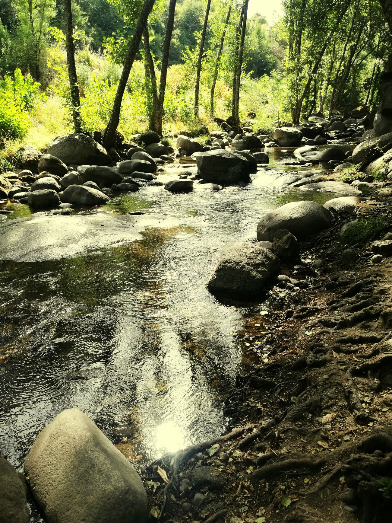 Fotonatut Water Forest Beauty In Nature River Tumblr Nature_collection