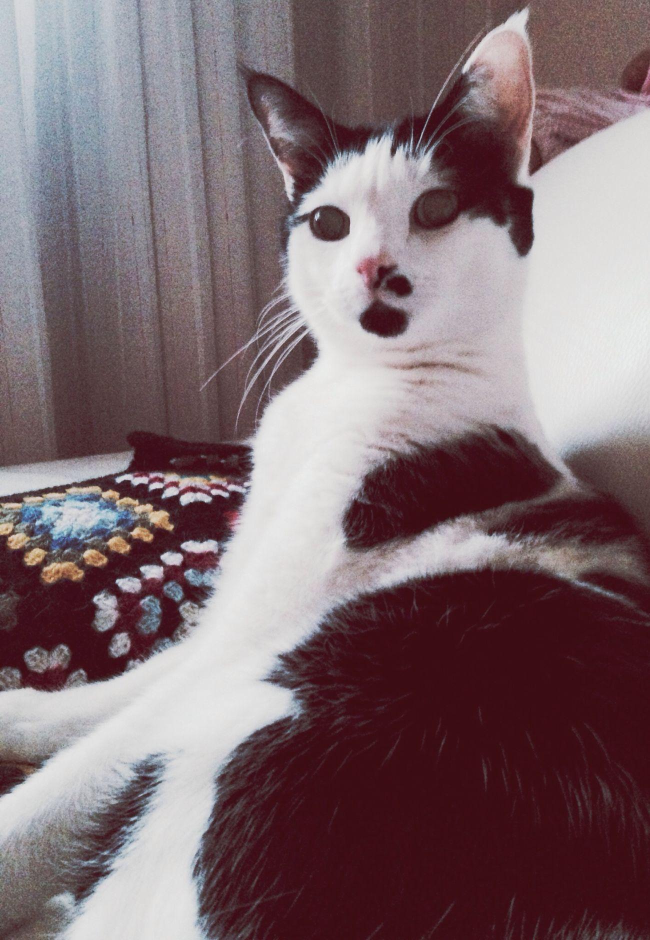 più che un gatto mi sembri un ?? ❤️