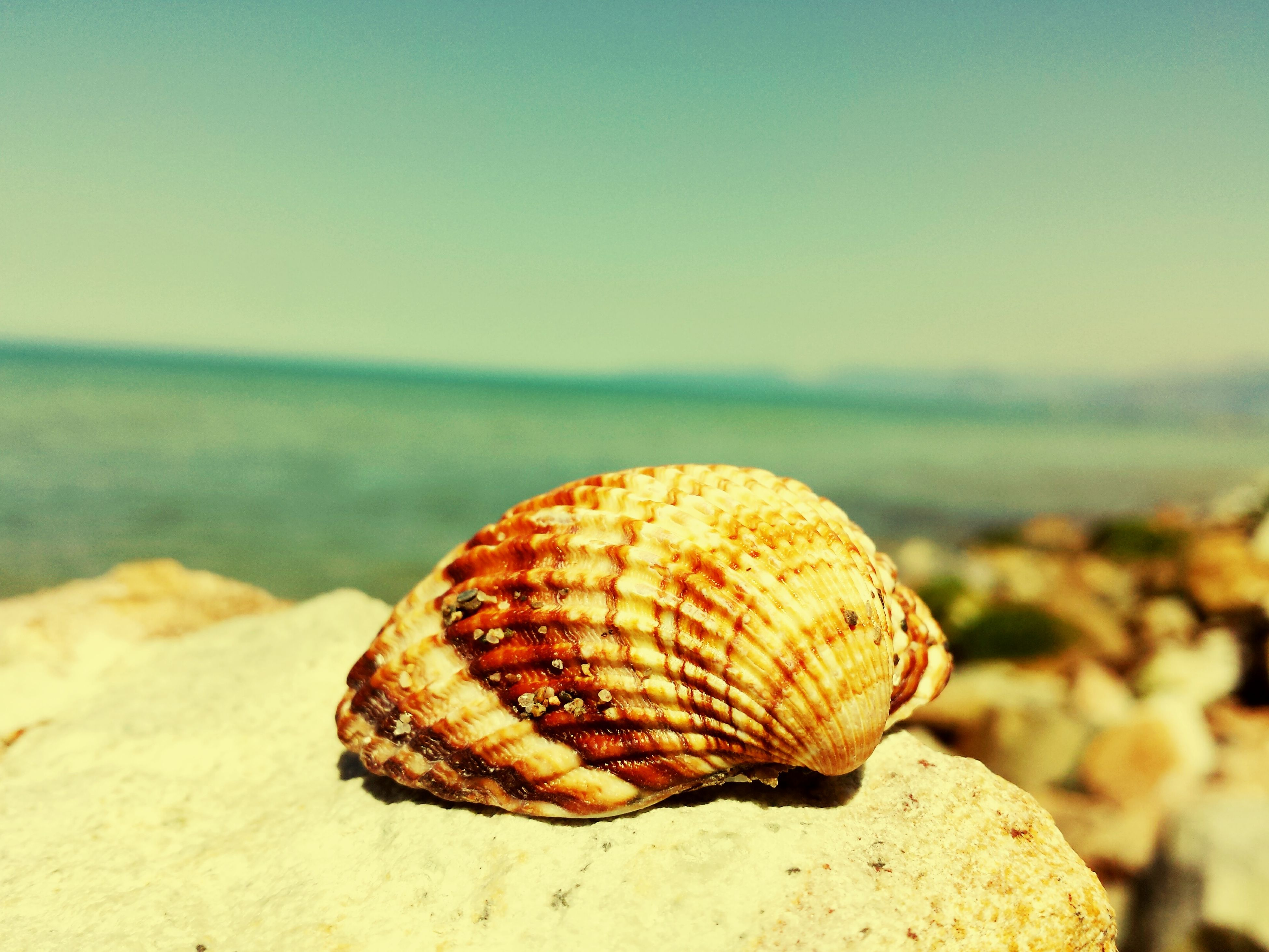beach, sand, focus on foreground, animal shell, sea, close-up, seashell, single object, shore, shell, sunny, non-urban scene, outdoors, nature, tranquility, sky, tranquil scene, beauty in nature, vacations, no people, scenics