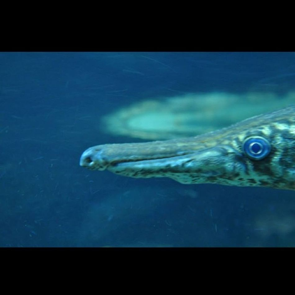 Predator Fish TamanSafariIndonesia Last year animal photography collection