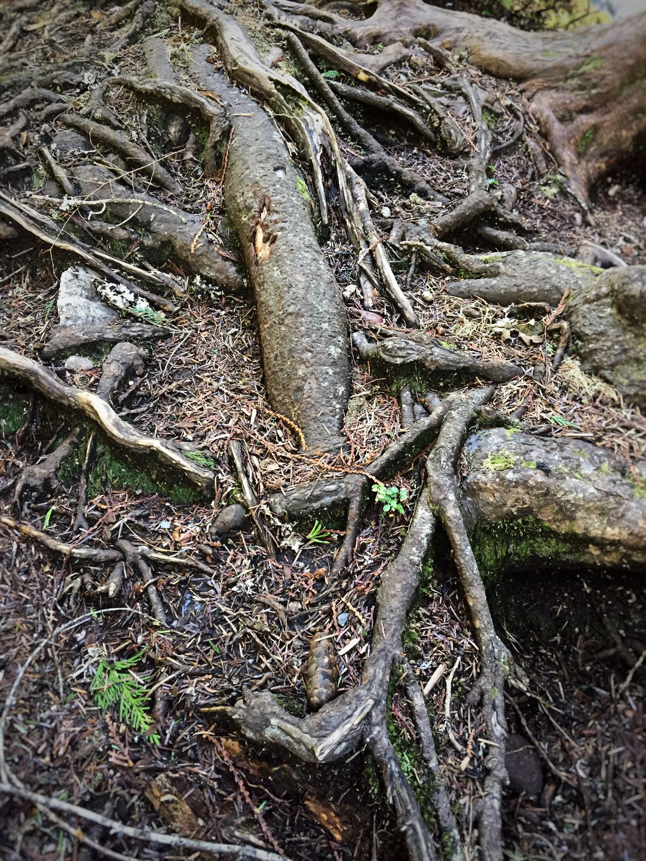 Faces In Nature Faces In Places Faces Of The World I See Faces Outdoors Nature Tree Forest Roots Versions