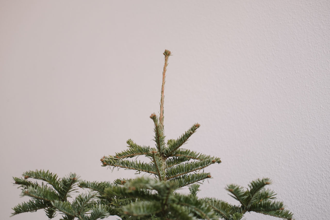 Beautiful stock photos of weihnachten, tree, growth, no people, nature