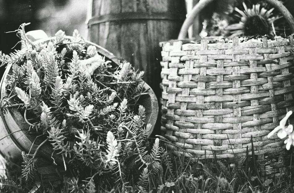 Blackandwhite Black And White Blackandwhite Photography Gardening Garden Photography Garden Wooden Basket
