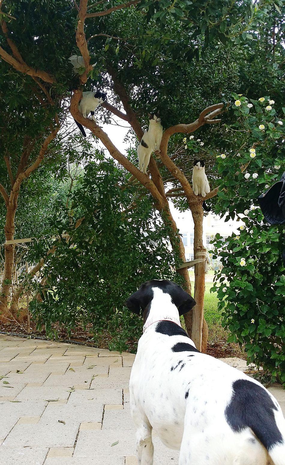 Dogs Cats Cyprus Nature Enjoying Life