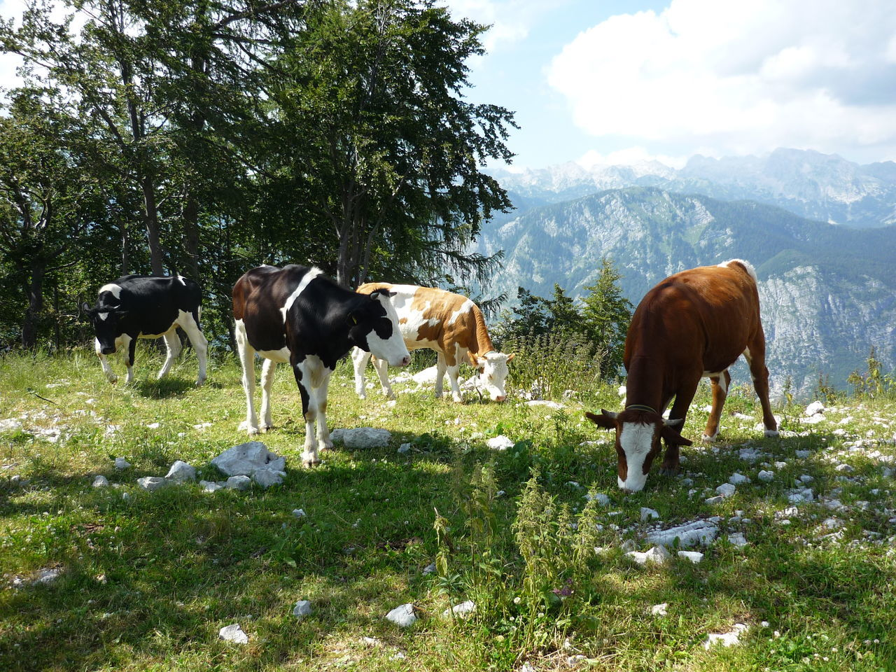 Cows Grazing On Landscape Against Mountains