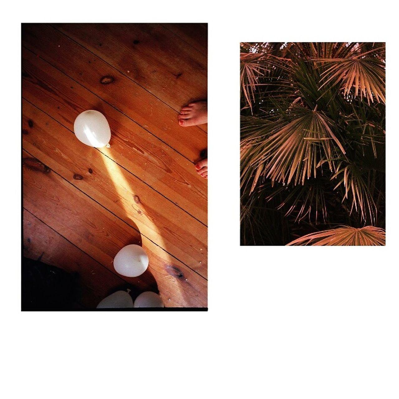 Summer ☀ Memories Palm Nature Feetselfie Kombi Love Analogue Photography Nikon Nikonphotography Mamiya No People Close-up Nature Day Outdoors First Eyeem Photo