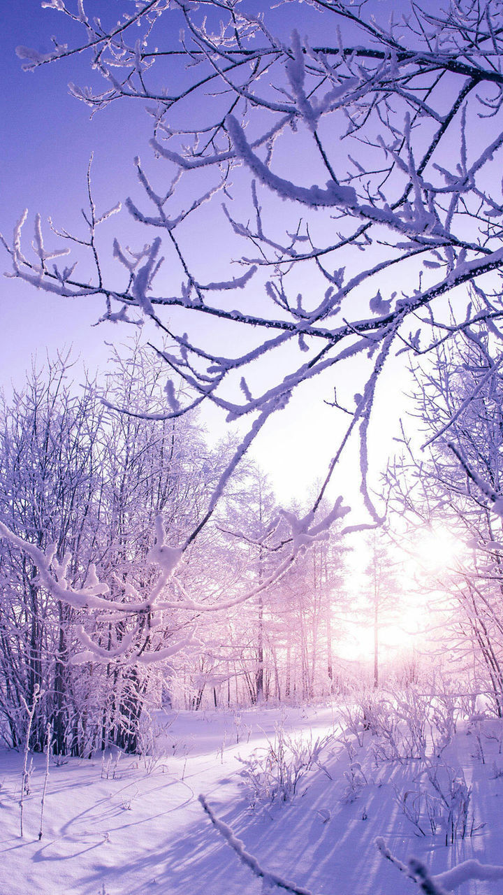 bare tree, winter, tree, snow, cold temperature, nature, beauty in nature, tranquil scene, tranquility, scenics, branch, weather, no people, day, sky, landscape, outdoors