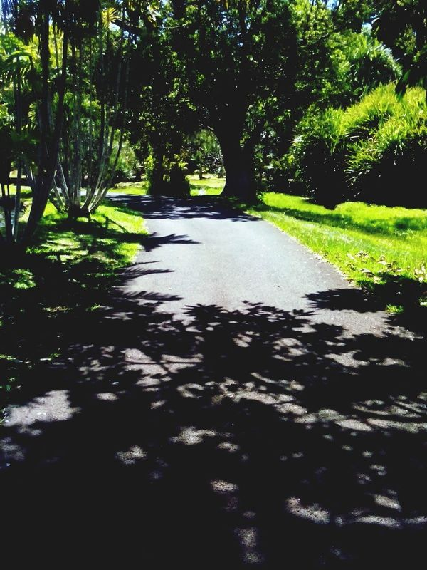 Pathway Shadows & Lights Trees Peaceful