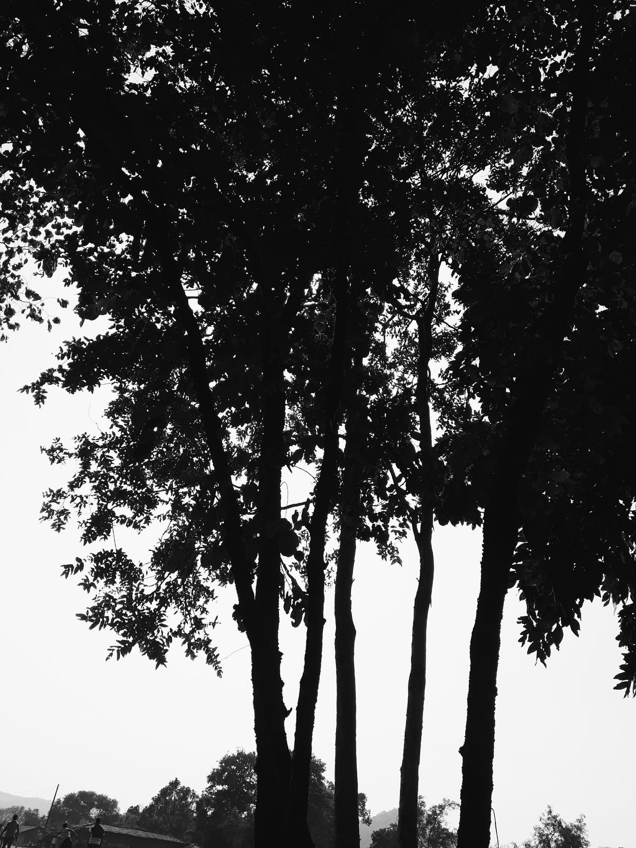 Tree Nature Sky Outdoors Beauty In Nature No People Low Angle View Branch Day Playing Match Tree Beauty In Nature Nature