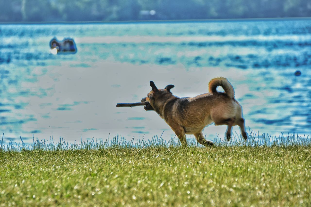 On The Lake Dog Lake Lake View Lago Di Scanno Lago Dogs Of EyeEm Dog Running Dog Playing With Tides Dog Playing Showcase August Colours Of Life Colours Of Summer