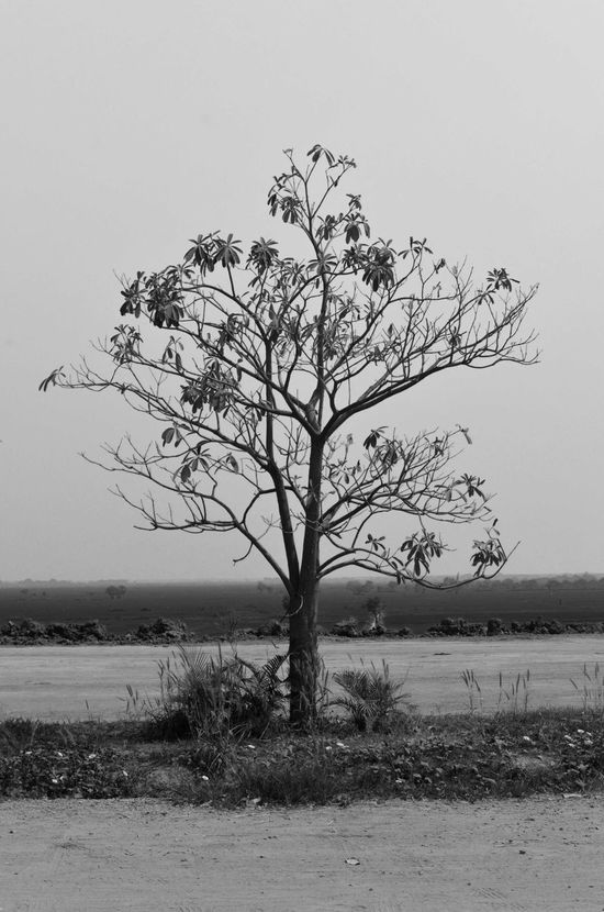 Blackandwhite Dead Tree Lone Nature No People Sad Tree White Black
