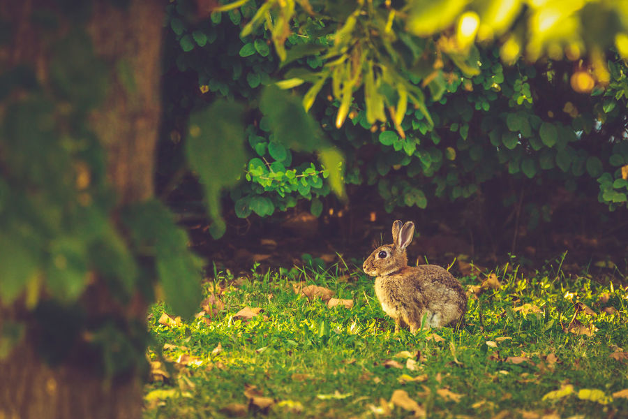 European Rabbit European Rabbit Animal Themes Animal Wildlife Animals In The Wild Common Rabbit Day Grass Green Color Growth Mammal Nature No People One Animal Oryctolagus Cuniculus Outdoors Rabbit