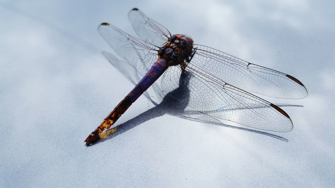 My Dragonfly Photo Taking Photos Dragonfly_of_the_day