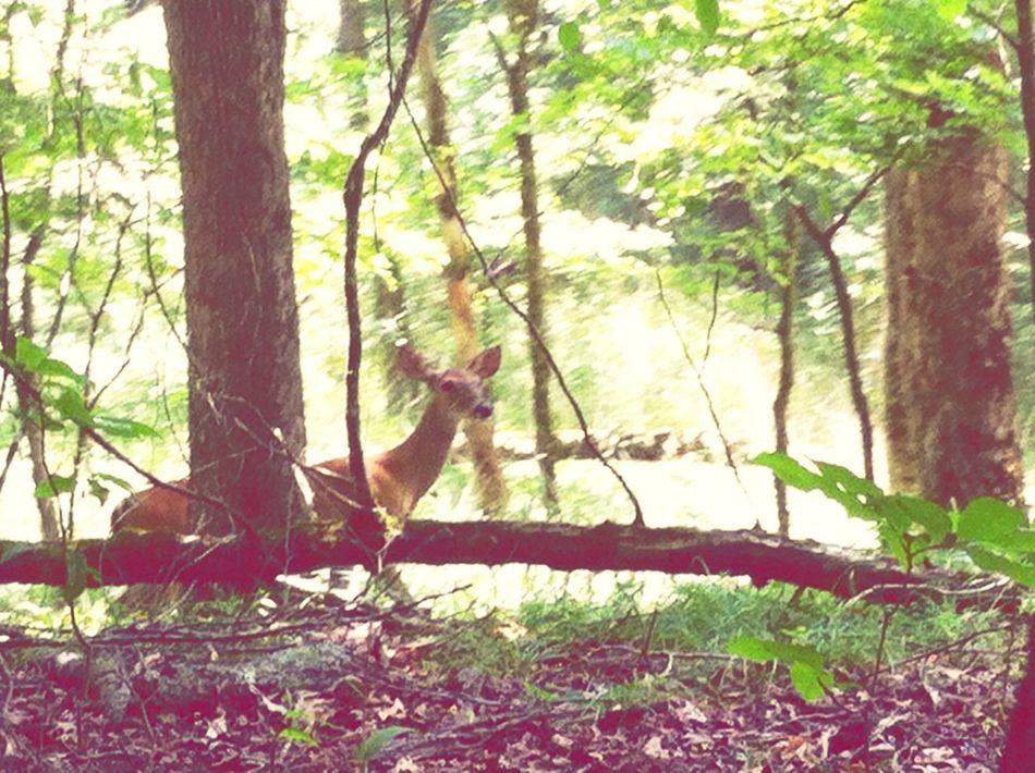 Broken Bow Life Oklahoma Deer Animal Nature
