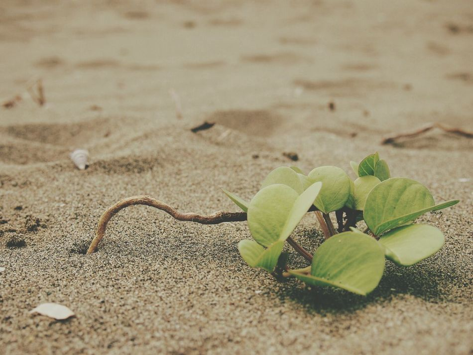 RePicture Growth Crawl Out For Tomorrow Sand Plant Life Nature 葉
