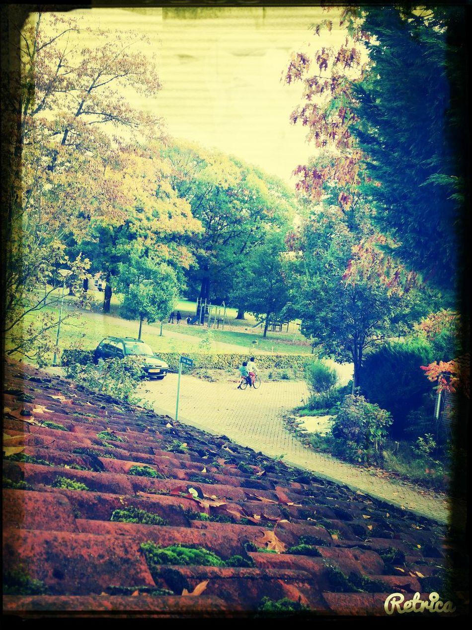 Autumn Kampong Lunetten First Eyeem Photo