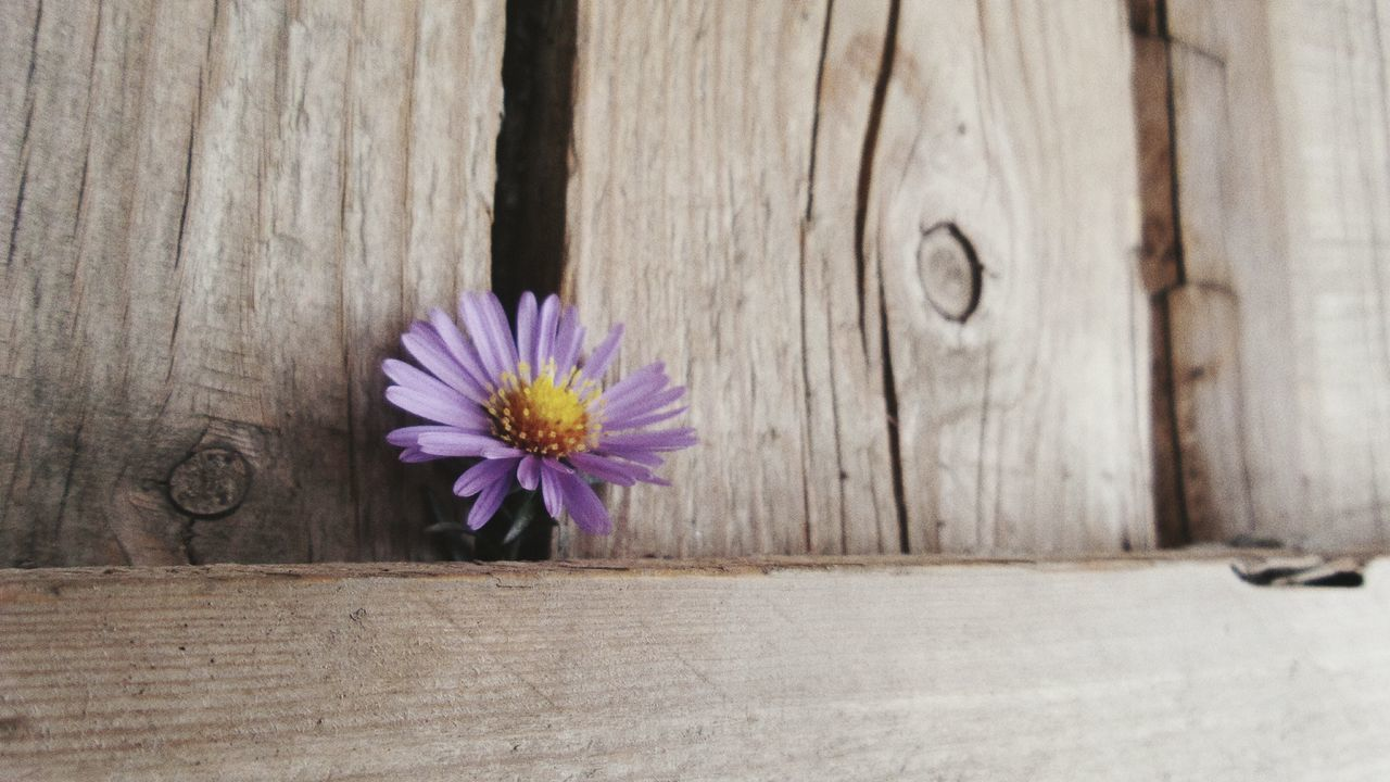 wood - material, flower, no people, nature, outdoors, beauty in nature, close-up, day