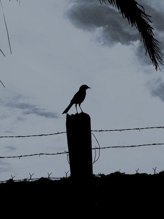 Bird Black & White First Eyeem Photo