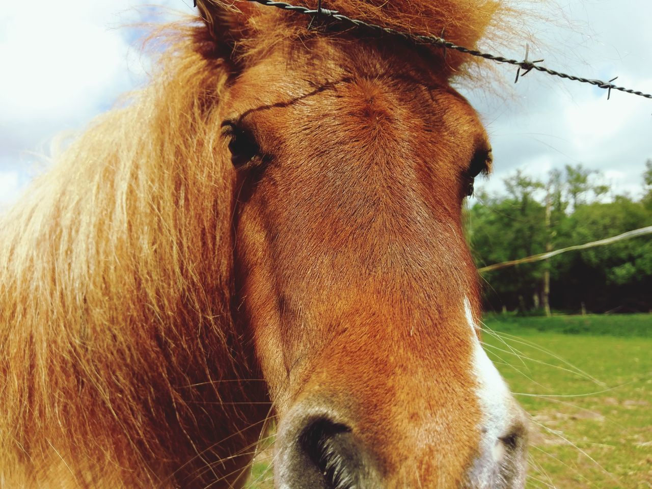 domestic animals, horse, one animal, animal themes, mammal, livestock, brown, herbivorous, animal head, day, close-up, focus on foreground, outdoors, no people, nature