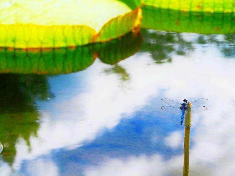 夏本番☀ 好きな場所 トンボ Dragonfly Sky Natural Sky_collection EyeEm Gallery EyeEm Best Shots EyeEm Nature Lover Riflection