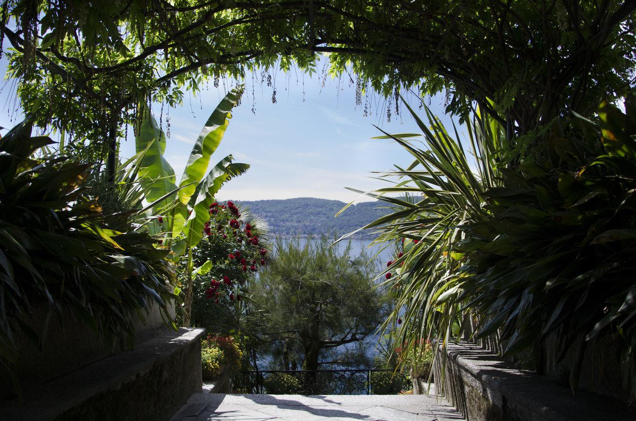 Cielo Frame It! Lago Lago Maggiore, Italy Natura Natural Frame Nature Piante Plants Sky View