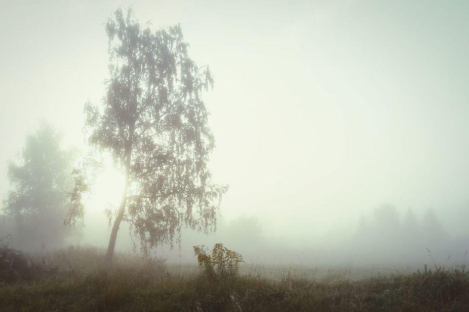 Morgennebel First Eyeem Photo Herbst