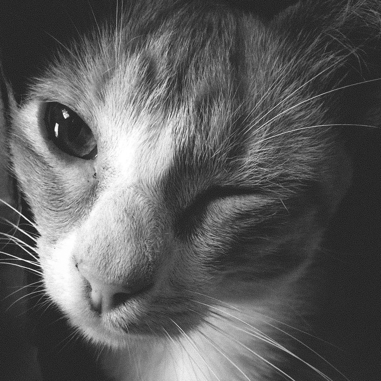 Cat Animal Themes Black And White Blackandwhite Close-up Domestic Animals Domestic Cat Feline Indoors  Mammal No People One Animal Pets Portrait Wink