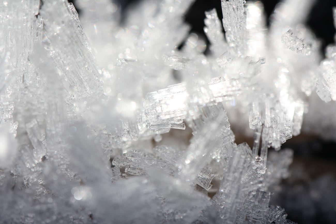 The nature defies the winter. Cold Frozen Drop Frozen Nature Frozen Plants Green Ice Ice Cristal White Winter Winterwonderland