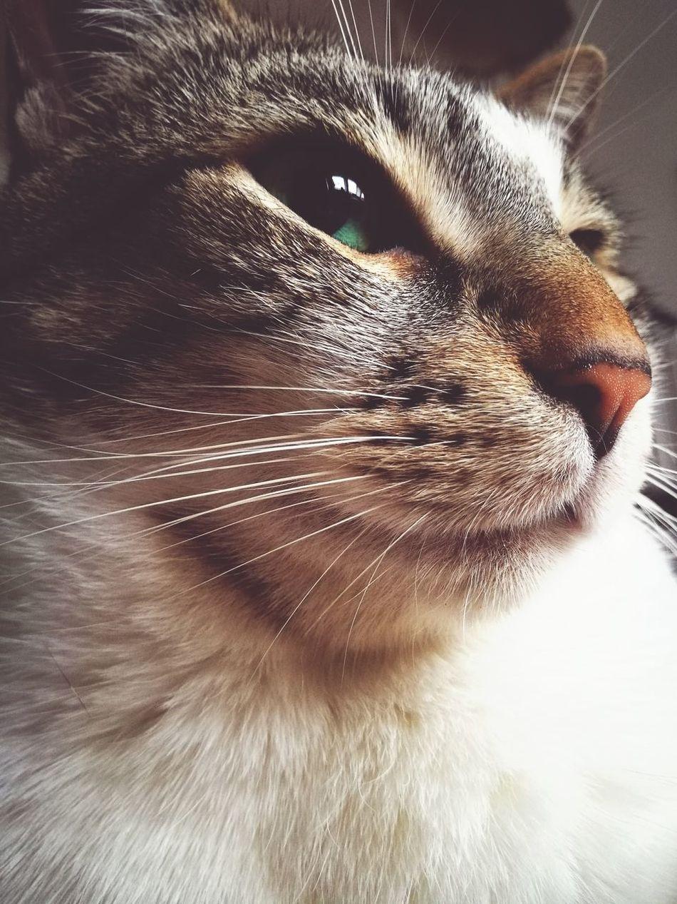 Im Serious I Feel I Am Beautiful Im Free Im Amazing  Cats Animals Katzen
