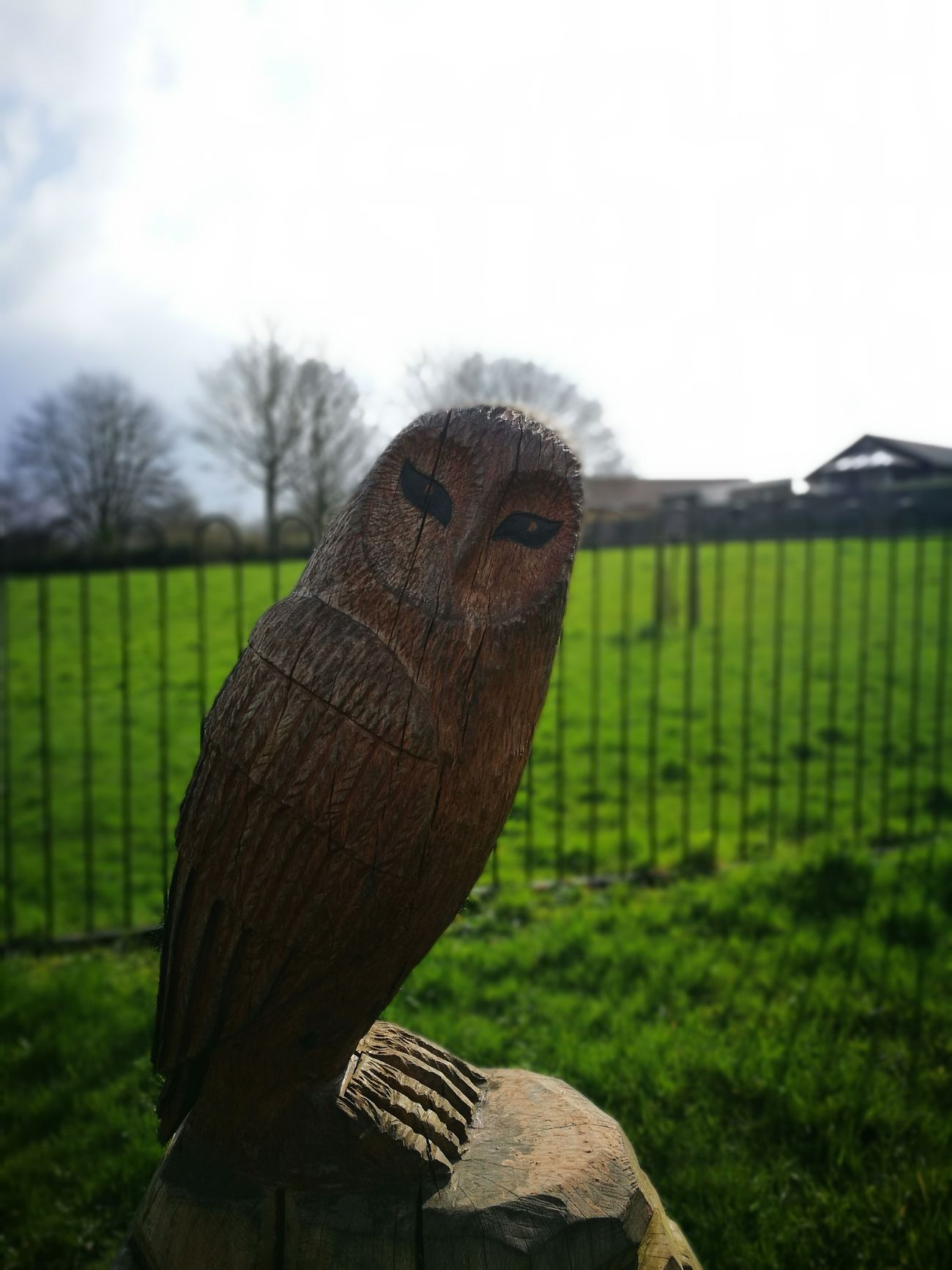 Statue Owl Wood Artistic Art Bokeh Outside Focus On Foreground Blurred Background HuaweiP9 Oo
