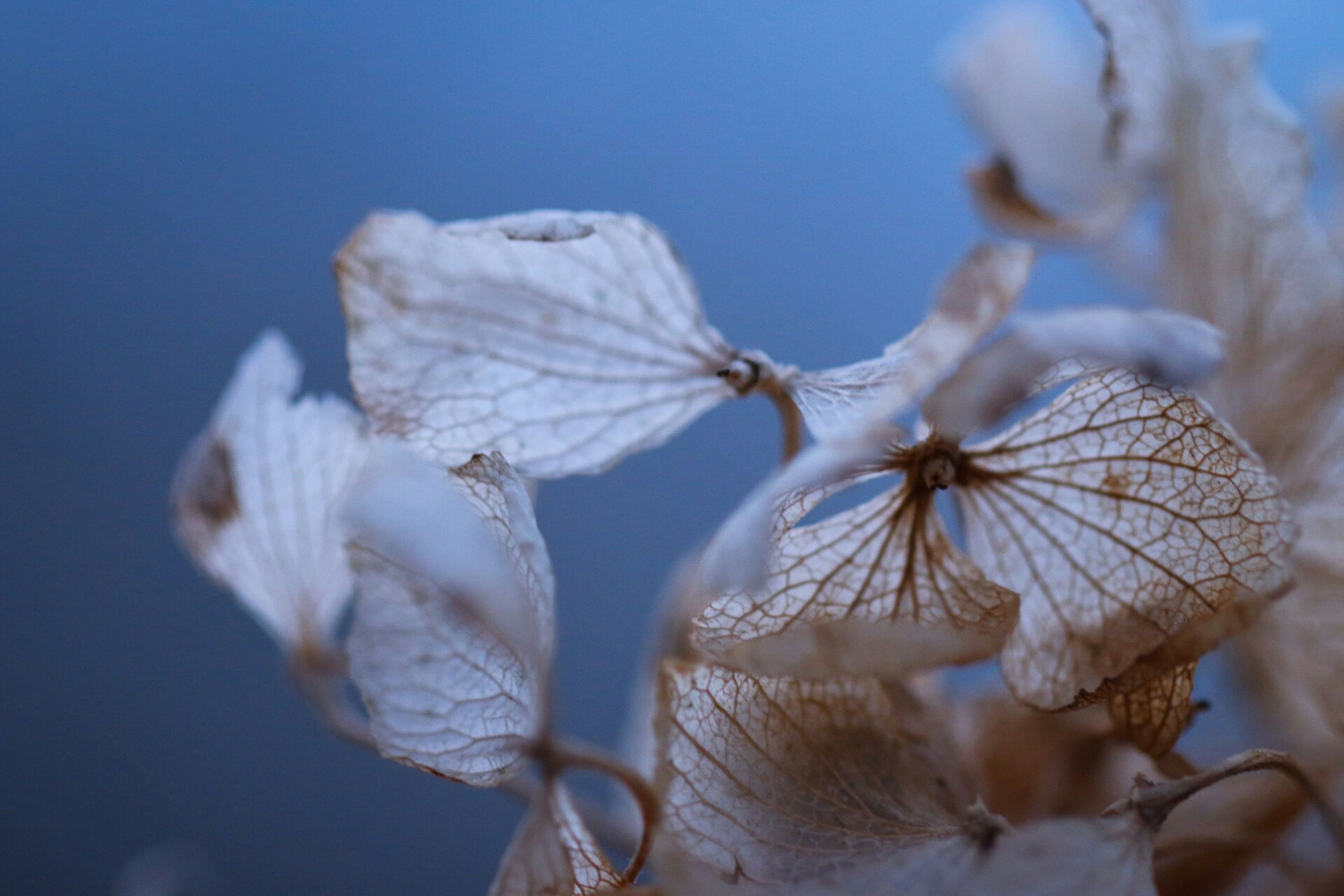 focus on foreground, close-up, insect, animals in the wild, wildlife, one animal, nature, animal themes, dry, day, natural pattern, outdoors, fragility, no people, selective focus, dead plant, dragonfly, beauty in nature, white color, twig