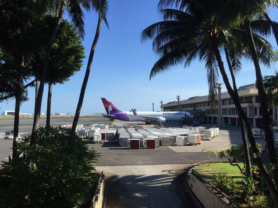 Hawaii Airport Hawaiianairlines Airplane