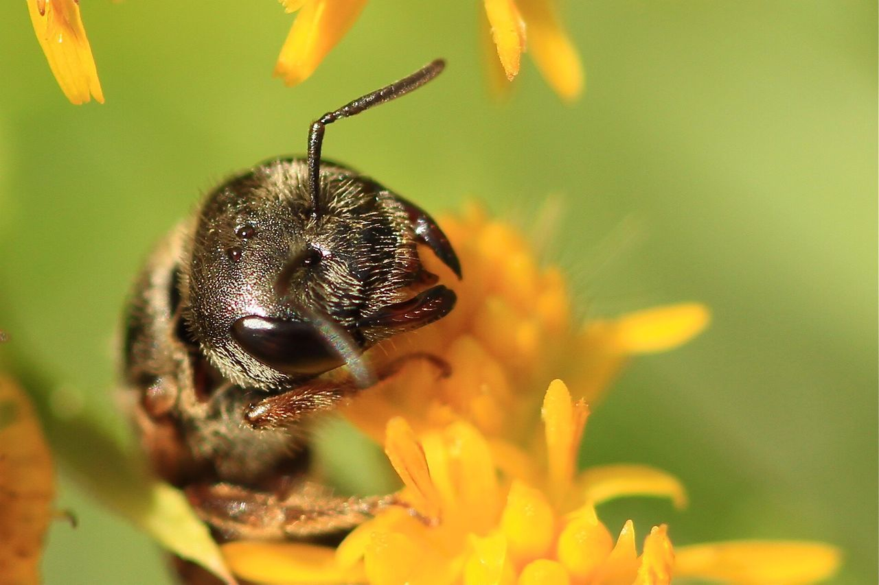Beautiful stock photos of bee, Animal Themes, Animal Wildlife, Animals In The Wild, Beauty In Nature