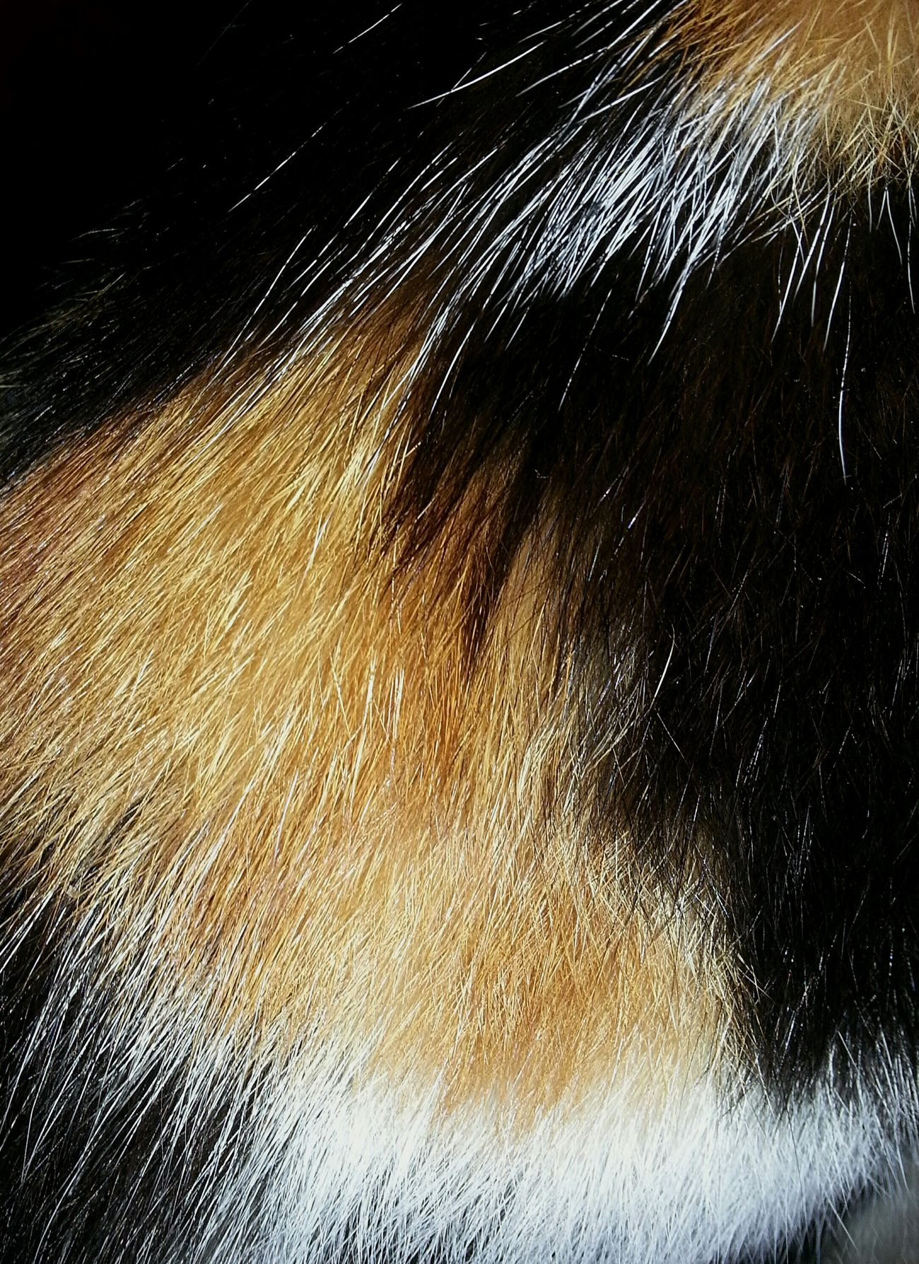 Motion Abstract No People Close-up Nature Beauty In Nature Focus Taking Photos Close Up Non-urban Scene Cat Cats Cat♡ Cat Lovers Cats Of EyeEm Animals Animal Themes Cute Pets Cute Cats Fur Coat Hair Hairstyle Colorful Colors