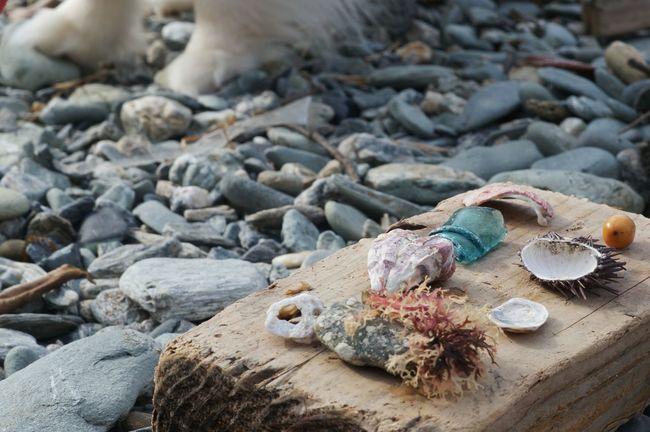 Nofilter Seaside Oldlens