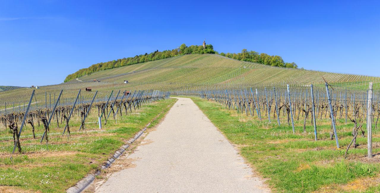 Road In Vineyard Against Clear Blue Sky