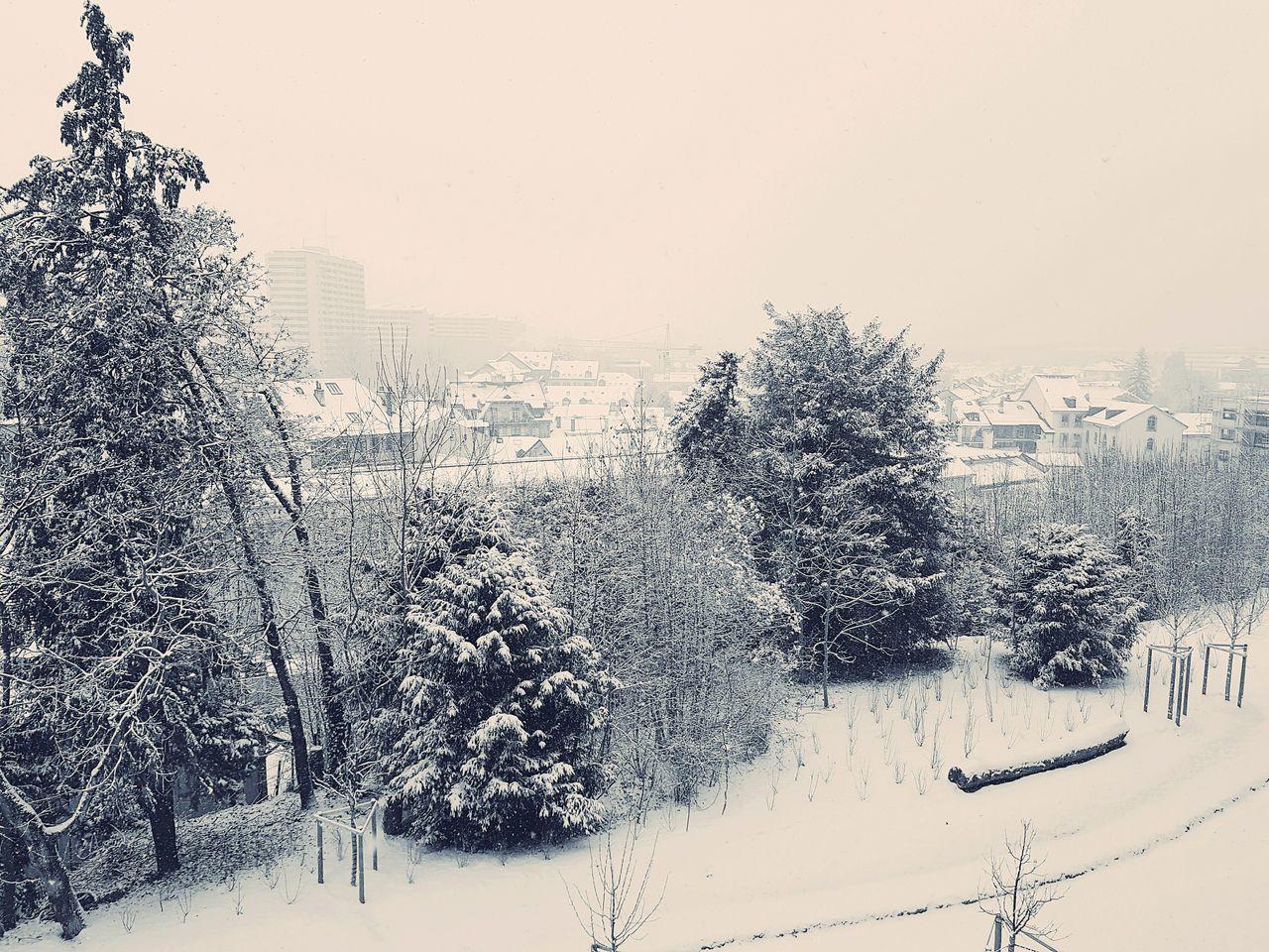 Geneva Geneve Switzerland Genevacity Snow Snow ❄ Snowing Snow Day Geneva Snow EyeEmNewHere EyeEm Best Shots EyeEm Nature Lover