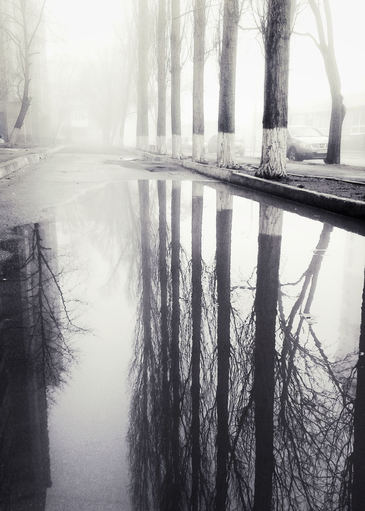 Reflection Tree Water Cold Temperature The Way Forward Calm Wet Weather Outdoors Bare Tree Branch Outdoor Photography Reflection Foggy Weather Spring Tranquility Foggy Morning Springtime Foggy Town Rainy Season Rain Built Structure Walking Growth