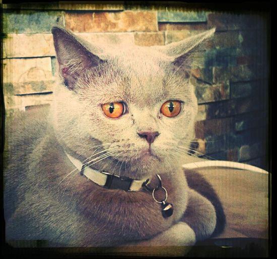Sheakspeare the Cat