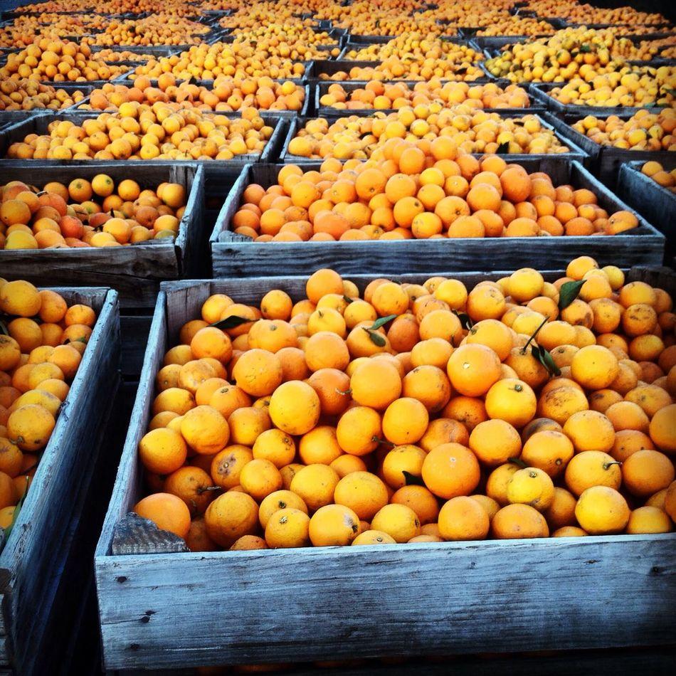 Beautiful stock photos of fruit, Abundance, Box, Container, Day