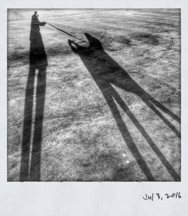 Monochrome Photography Shadow Groodle Dogs Dogs Of EyeEm