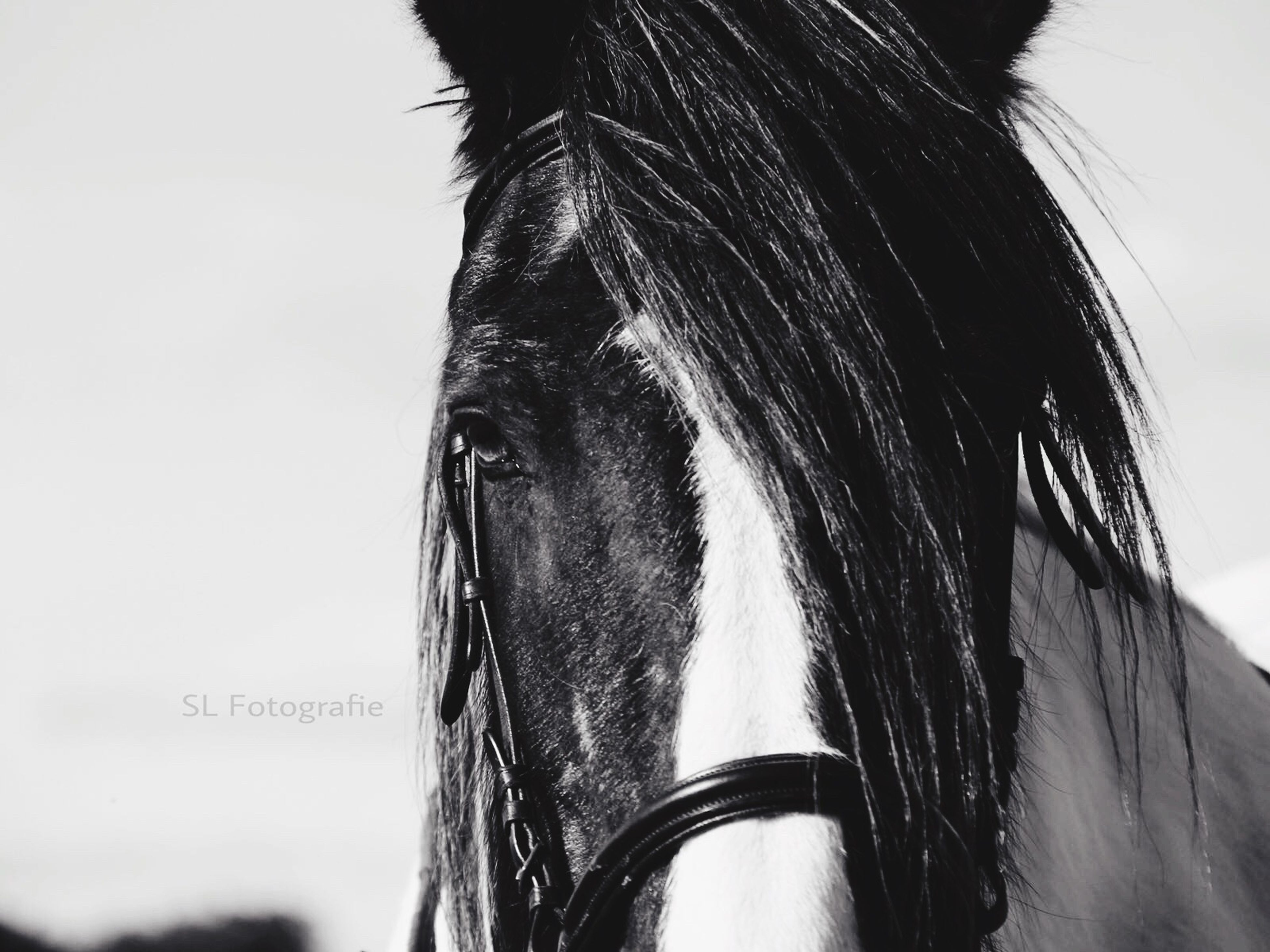 horse, close-up, animal body part, part of, domestic animals, livestock, mammal, herbivorous, animal hair, bridle, zoology, outdoors, focus on foreground, mane, extreme close up, no people, studio shot