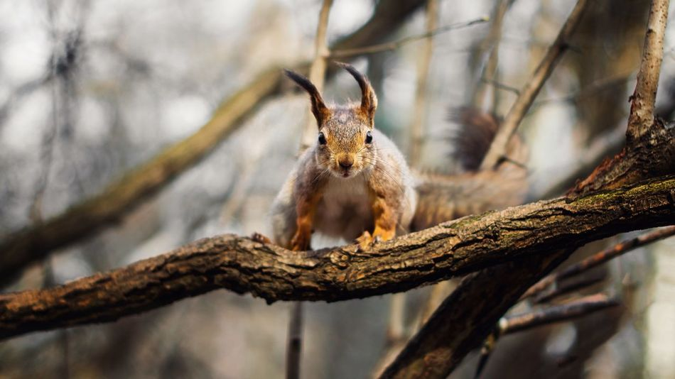 One Animal Animals In The Wild Animal Themes Branch Squirrel Animal Wildlife No People Focus On Foreground Tree Nature Day Mammal Outdoors Close-up